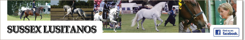 Sussex Lusitanos